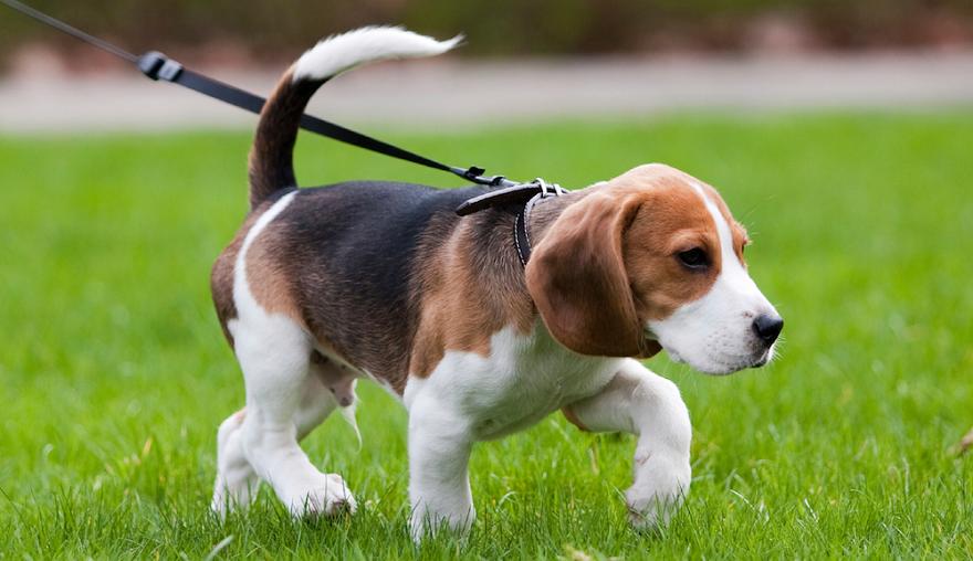 Има доста начини, по които влудяваме кучетата, без изобщо да